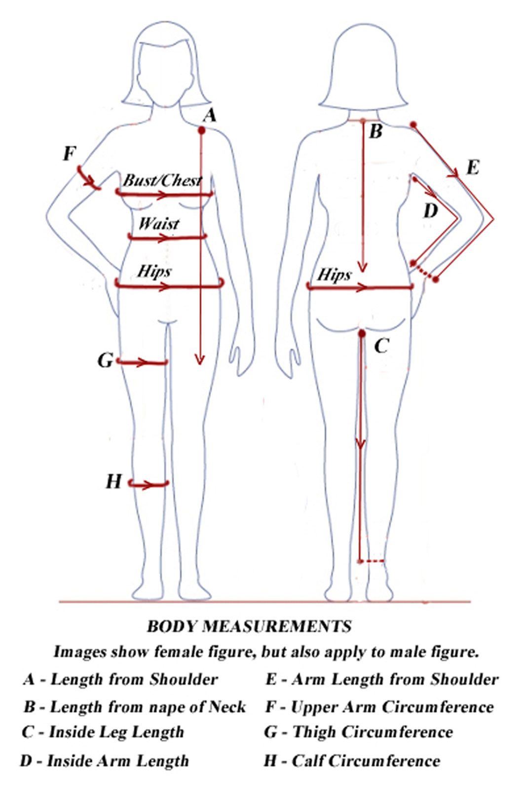 Girth measurements will give you additional valuable information to assess the progress of your bodybuilding program. To take your body tape measurements, you will need a flexible tape measure that you can wrap around your body parts (or, if you want to go old school, you can wrap a string and then.